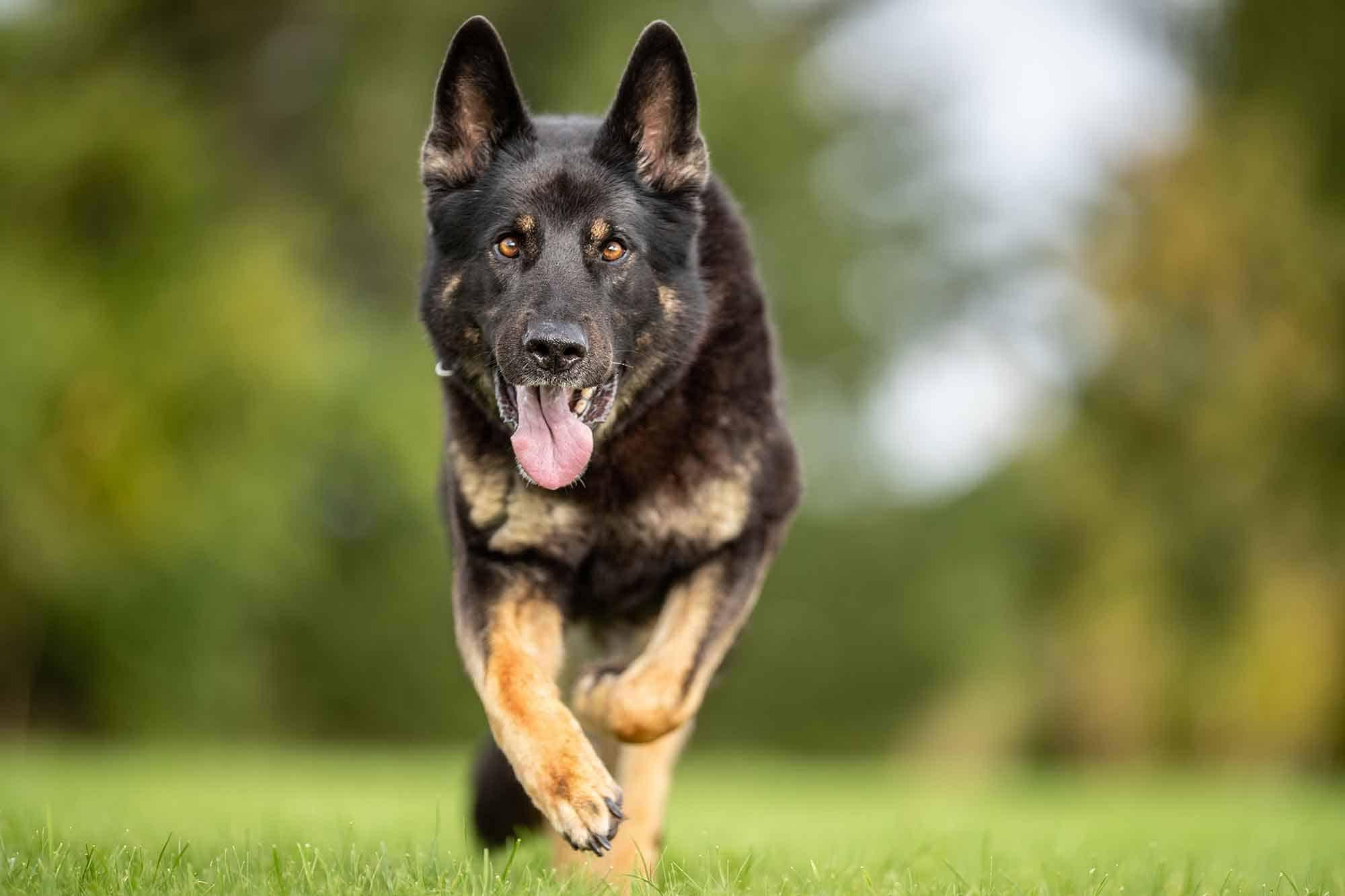 Doggo Slider 001