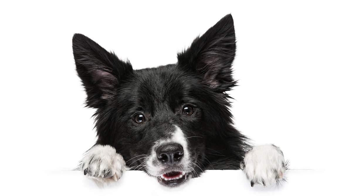404 Error Koira