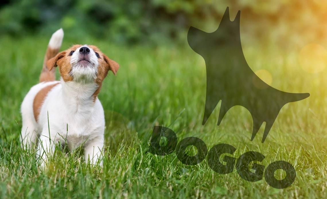 Doggo.fi kansikuva