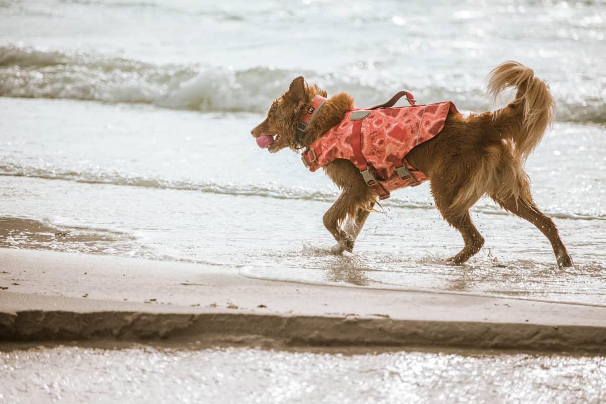 Hurtta Life Savior Eco Koiran pelastusliivit