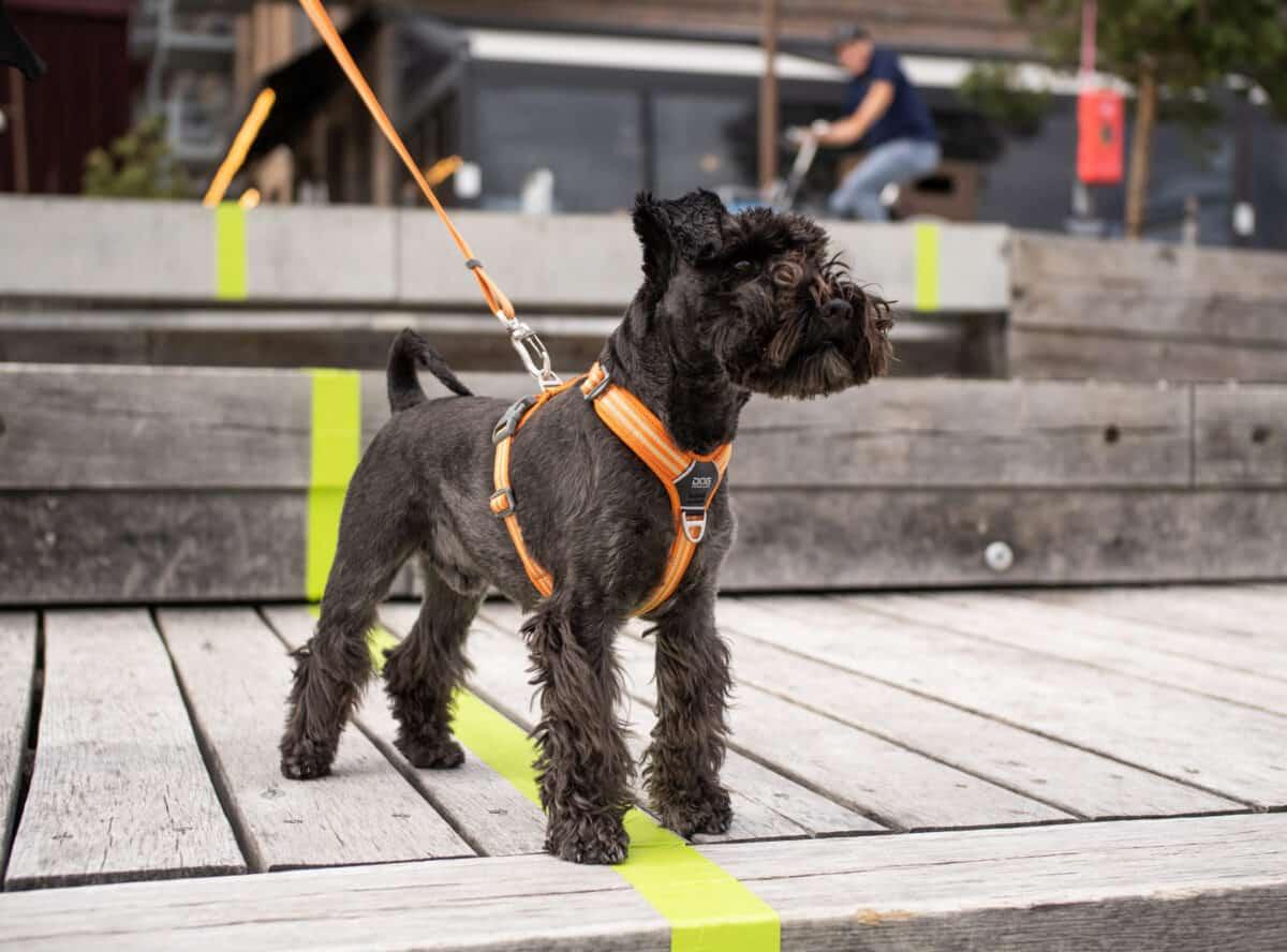Dog Copenhagen Comfort Walk Air Koiranvaljaat