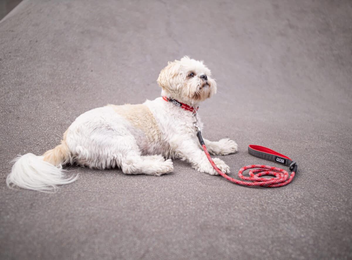 Dog Copenhagen Urban Rope