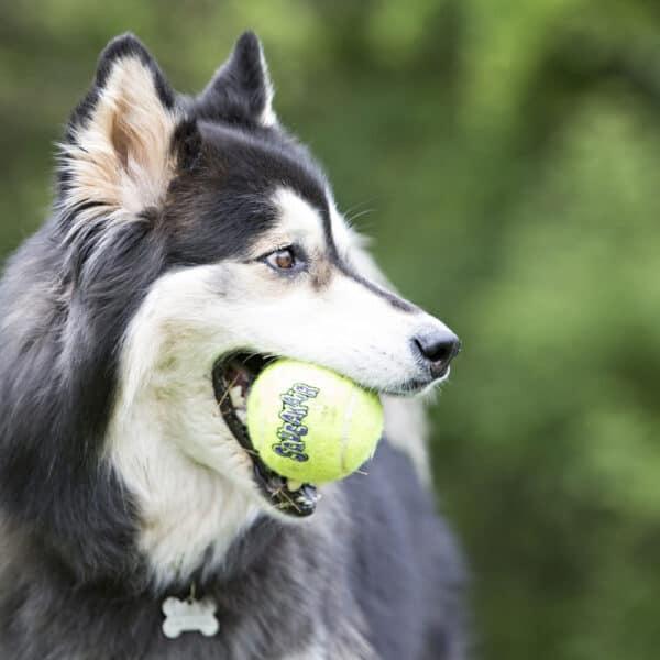 Kong Squeakair tennispallo
